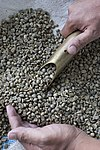 Agribusiness Project - Coffee beans (4874206185).jpg