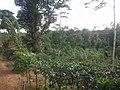 Ahangama, Sri Lanka - panoramio (8).jpg