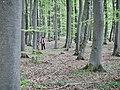 Albtraufwanderweg - panoramio.jpg