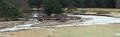 Allanaquoich Bridge (Mar Lodge Estate) from Linn of Dee road (31DEC15).png