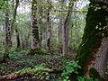 Altnurga saarik, 2012-10.jpg