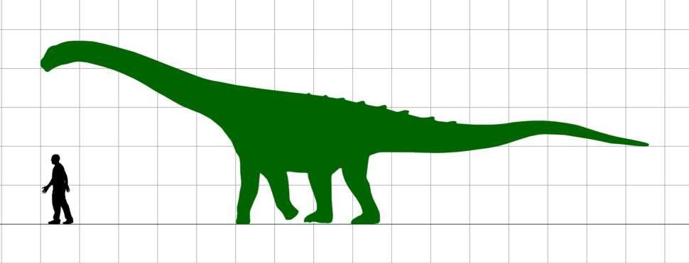 AmpelosaurusScale