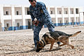 Anbar Police stand up K-9 unit DVIDS272339.jpg