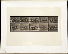 Animal locomotion. Plate 701 (Boston Public Library).jpg