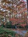 Ansley Park.jpg