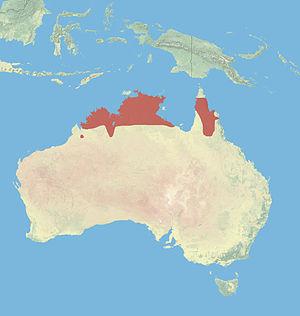 Antilopine kangaroo - Image: Antilopine Kangaroo