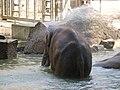 Antwerp Zoo (12210888123).jpg