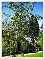 April Freiburg Botanischer Garten - Master Botany Photography 2013 - panoramio (5).jpg