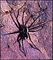 Araignée grotte Fourgassié.jpg