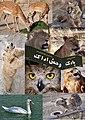 Arak Zoo باغ وحش اراک - panoramio.jpg