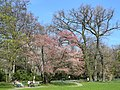 Arboretum Zürich 2012-03-26 13-39-16 (P7000).JPG