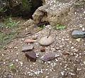 Artefactos Bosque Las Petras Quintero.jpg