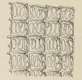 Ascidia mentula 003.png