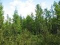 Asinovsky District, Tomsk Oblast, Russia - panoramio (122).jpg
