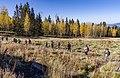 Aspen loop hikers (37050349043).jpg