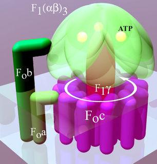 F-ATPase