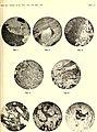 Atti della Accademia gioenia di scienze naturali in Catania (1919) (20320438866).jpg