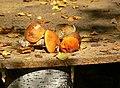 Autumn (3202849989).jpg