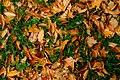 Autumn Carpet (186402211).jpeg