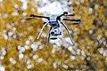 Autumn Drone.jpg