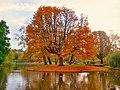 Autumn In Vondelpark (127412401).jpeg