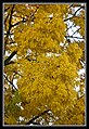 Autumn Leaves begin to fall-035 (5674893591).jpg