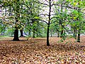 Autumn in Bute Park - Cardiff - geograph.org.uk - 1575690.jpg
