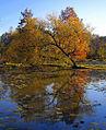 Autumn in Kenilworth.jpg
