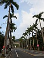 Avenue of royal palm trees at the entrance to Zhongxing New Village.jpg
