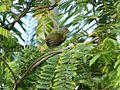 Aves Parque ambiental.jpg
