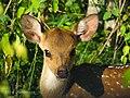 Baby deer waiting for it's mama.jpg