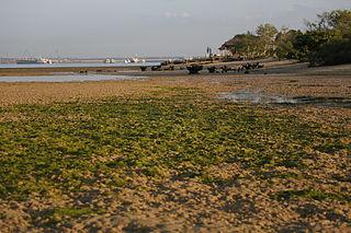 Mangrove Care Forum Bali