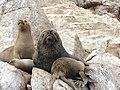 Ballestas Islands, Peru - panoramio (6).jpg
