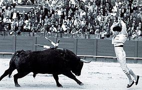 expose en espagnol sur la corrida