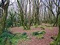 Barna Woods - geograph.org.uk - 1249245.jpg
