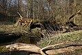 Bartoszyce. Suszyca płynąca przez Lasek Tepedowski ma cechy pięknej i dzikiej rzeczki z malowniczo powalonymi drzewami. - panoramio.jpg
