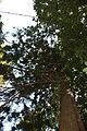 Batumi Botanical Garden (15).jpg