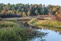 Bayou Bartholomew near Pine Bluff, AR.jpg