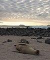 Beached Sea Lions (6519202835).jpg