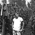 Bean picker, c. 1955.jpg