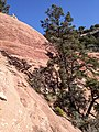 Bear Mountain, Sedona, Arizona - panoramio (46).jpg