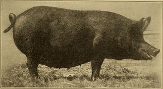 Beginnings in animal husbandry (1912) (20353361662).jpg
