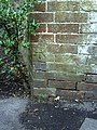 Benchmark on wall and holly sapling in Bowling Alley Walk - geograph.org.uk - 2095648.jpg