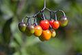 Berries Vancouver.jpg