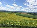 Bibaushi, Biei, Kamikawa District, Hokkaido Prefecture 071-0471, Japan - panoramio (4).jpg
