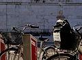Bike sharing schio.jpg