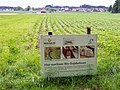 Bio-Sojabohnenanbau bei Wäldi TG.jpg