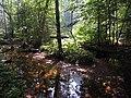 Biogradska reka2.jpg