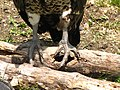Bird feet (9112347750).jpg