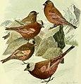 Bird lore (1913) (14726501156).jpg